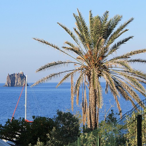 A #palm #tree, that's all we need in life ! #Stromboli, #Sicily by Nouhailler