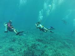 underwater diving, sports, recreation, outdoor recreation, marine biology, scuba diving, divemaster, water sport, underwater, freediving,