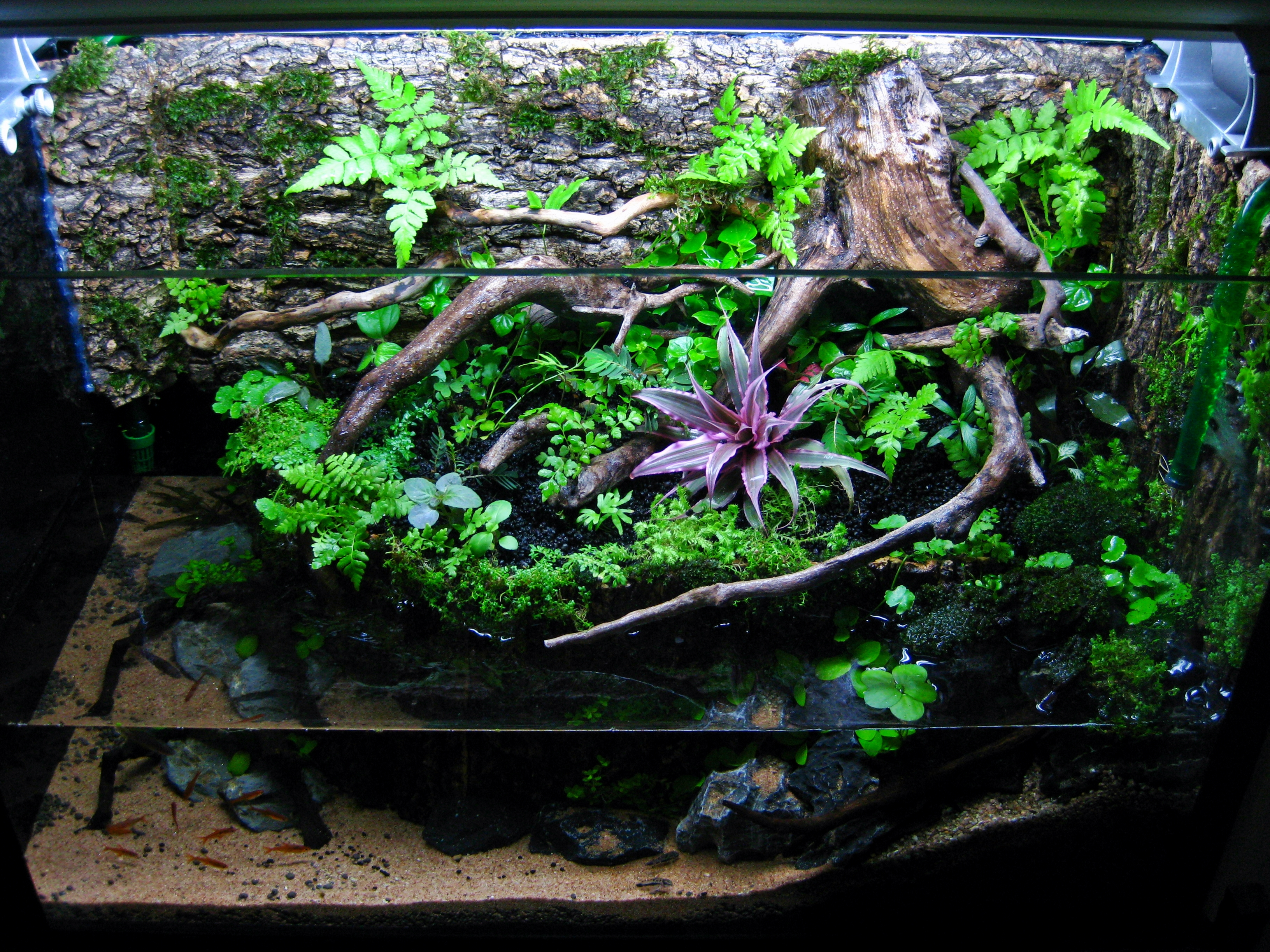 Initial planting. Took some wild plants from a nearby drain. Unique Fish Tank Decorations