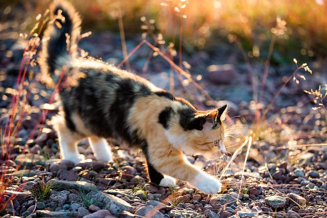 Cat Outside Litter Box