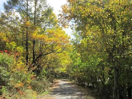 綺麗になってきた散歩道@蓼科高原 2013年10月21日11:43 by Poran111