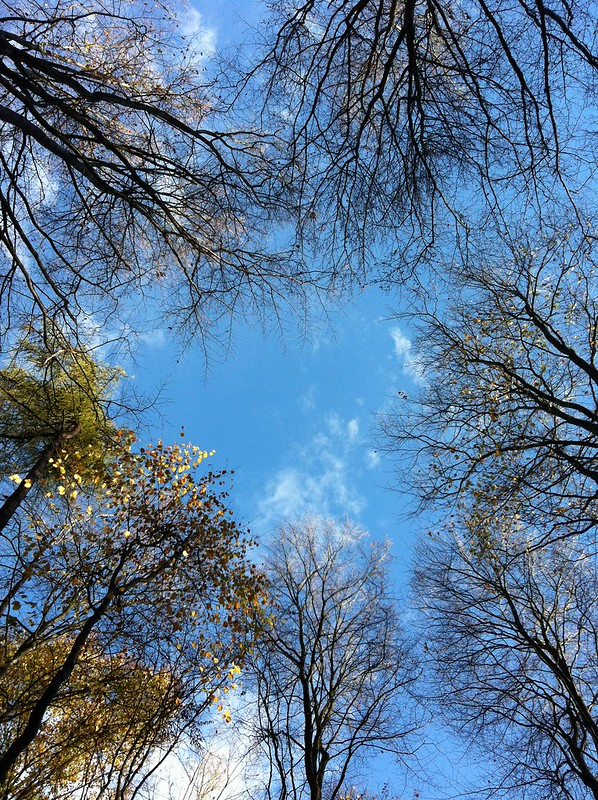 Autumn in the Taunus_looking up through the trees