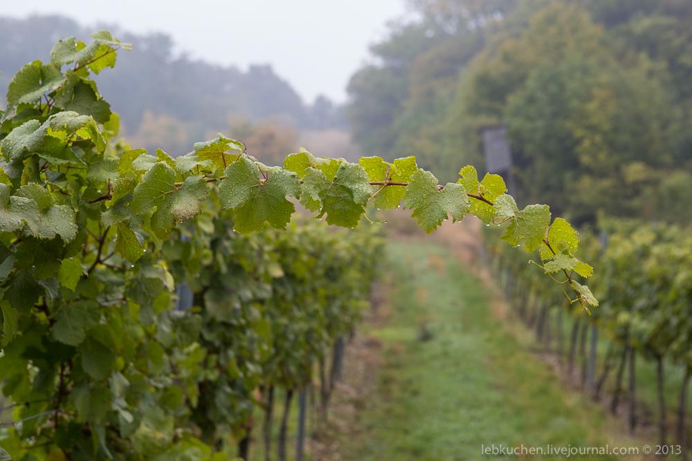 Венские туманные виноградники