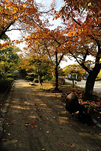 Autumnal leaves of Osaka Castle.