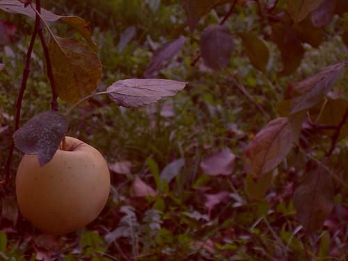 Jabuka/Apple