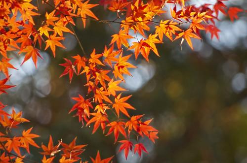 【写真】2013 紅葉 : 上御霊神社/2020-07-01/IMGP4195