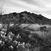 San Rita Mountains, Arizona #3013 bw
