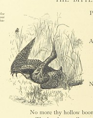 Image taken from page 48 of 'Grandpapa's Verses and Pictures; or, natural history in play. By T. P. M. With ... illustrations by R. H. Moore'