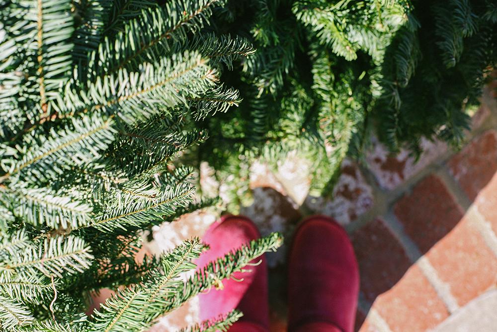 christmasneedles_1_web