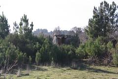 Pala da Moura em Vilarinho da Castanheira, Carrazeda de Ansiães