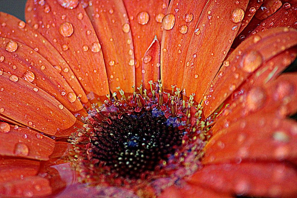 IMAGE: http://farm6.staticflickr.com/5489/11973077524_11d9eff6bd_b.jpg