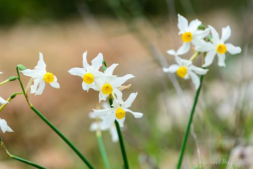 flowers israel north naturelandscape haluts