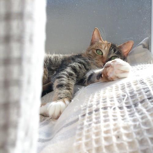 出窓に置いてあげたクッションに寝転がり日向ぼっこ by Chinobu