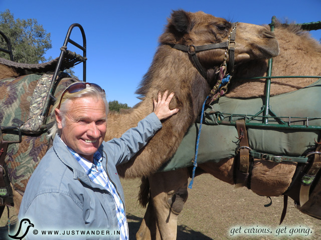 PIC: Bill with the camels at Giraffe Ranch