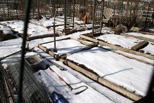 snowy raised beds