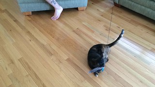 Bird Catcher Pro EX by Pets Can Play product review