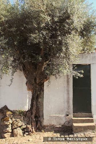 23 - провинция Португалии - маленькие города, посёлки, деревушки округа Каштелу Бранку