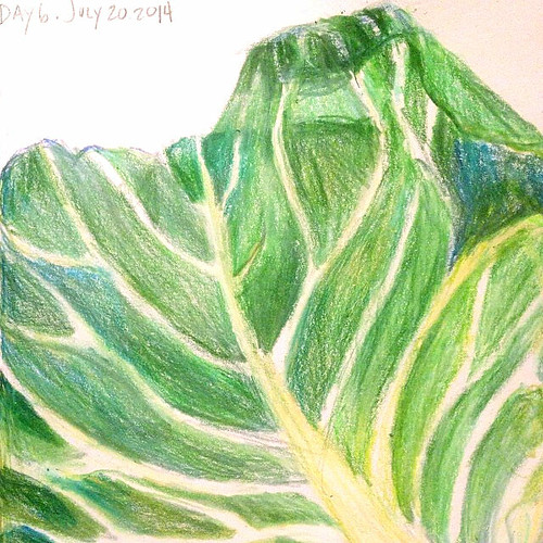 Day 6 of #30drawingdays Colored pencil drawing of a cabbage leaf. #drawing #sketch #cabbage #fooddrawing #coloredpencils