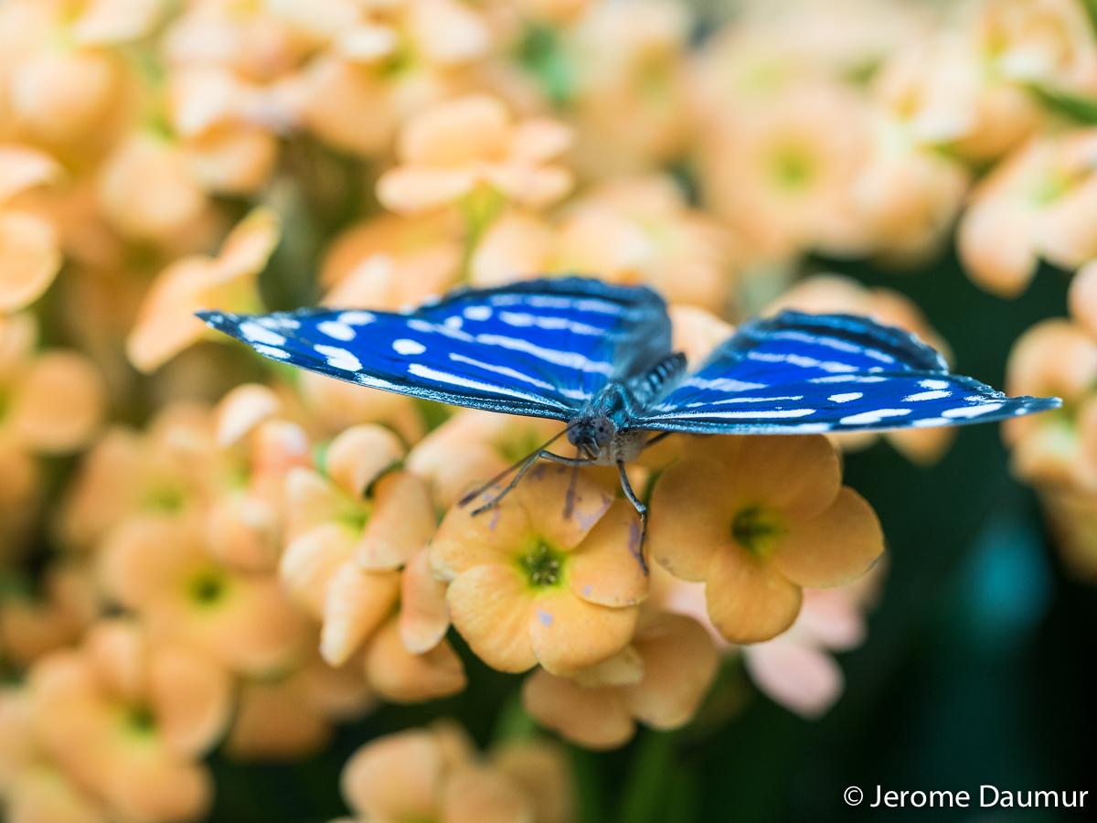 Butterflies Garden 1