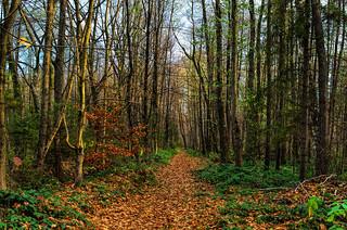 Осінній ліс. Autumn forest.