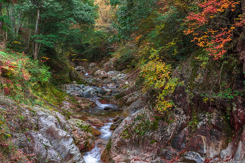 nibukawa valley imabari ehime shikoku japan landscape scenery nature autumn fall leaves river nikon d7200 sigma 1770mm 1770