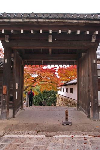 【写真】2012 紅葉 : 知恩院/2021-06-17/IMGP7981