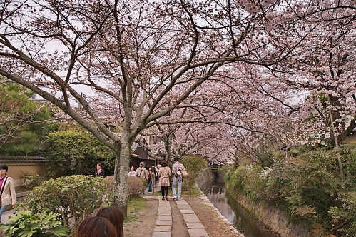 【写真】2013 桜 : 哲学の道/2018-12-24/IMGP9212
