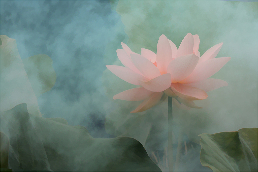 Lotus Flower surreal series -  DD0A0331-1-1000