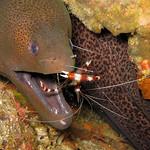Morey Eel - Raya Yai Island Scuba Diving Tours