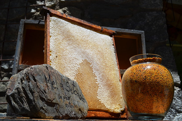 Honeycomb and bee pollen