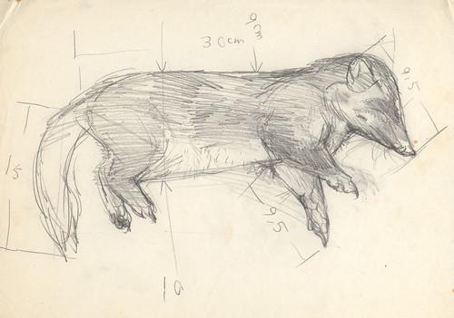 fig1. 這是一隻被狗咬死的鼬獾年輕成體。