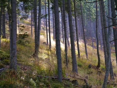 light alps forest austria licht österreich alpen wald steiermark styria fischbacheralpen rennfeld