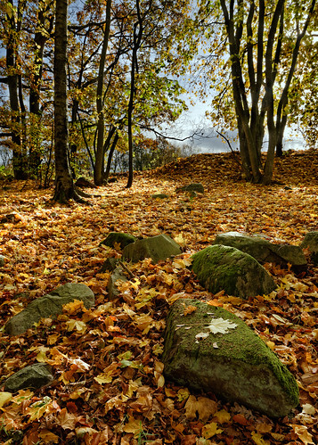 autumn trees fall leaves vertical forest skåne woods rocks sweden d800 2013 tornahällestad