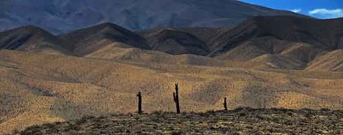 argentina landscape salta