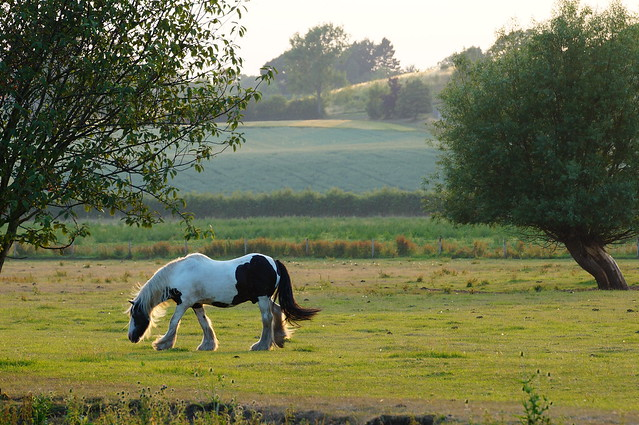 Wasperton Horse at Dusk