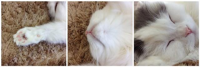 White Cat Montage