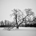 Spirit Tree in the Storm/Claymont Society