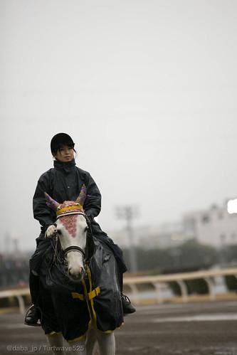 20131220 川崎競馬場誘導馬 / Lead Horse at Kawasaki