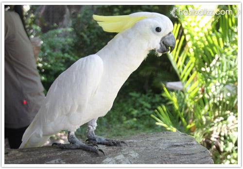 11713535644 23cb569ddc o BERCUTI DI HATYAI THAILAND PART 6   songkhla Zoo