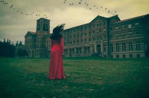 as the crow flies by elle.hanley