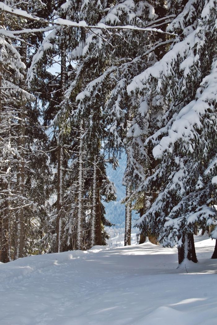 Au Pays du Mont-Blanc (5)