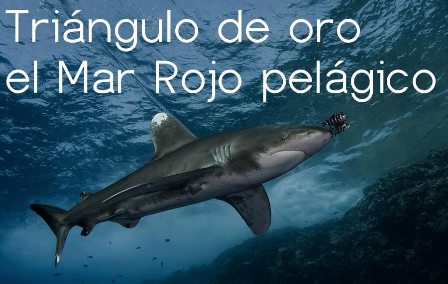 buceo Mar Rojo ruta BDE