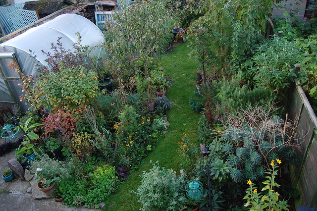 Looking Down on the Back Garden - October 2016