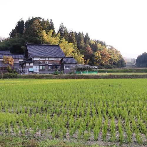 周りはこんな景色が広がっています。あの、奥んとこにチラッと見える屋根がうち。 #なんと #南砺 #富山県