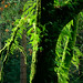 epiphyte backlight by David Fast