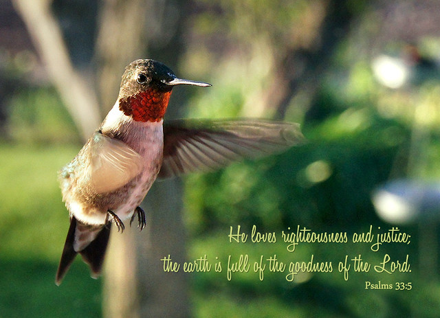 Hummingbird, Scripture, Psalm 33:5, Inspirational