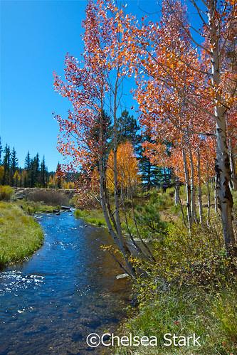 """Duck Creek"""" © Chelsea Stark http://www.chelseastarkphotography.com by chelseastarkphotography.com"""