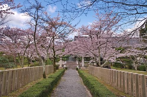 【写真】2013 桜 : 大覚寺/2020-09-15/IMGP9408