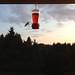 hummingbird by jessamyn