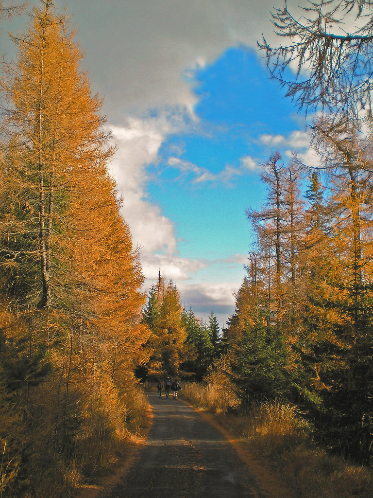 Autumn in the coniferous forest